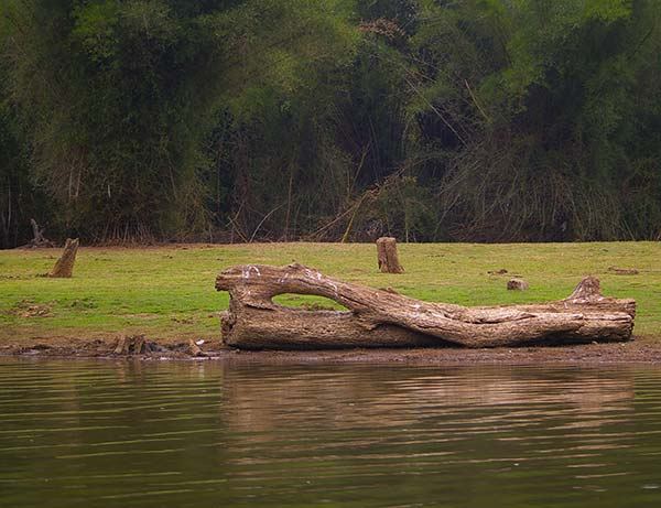 South India Nature Tour | Luxury tour in Kabini | The Travel Planners