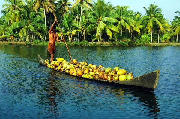 Off The Beaten Track | Kumarakom Backwater | Luxury Resorts in Kumarakom | The Travel Planners