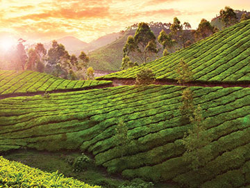 Munnar Luxury Tourism | Kerala Luxury Tour Packages | Luxury Hotel Booking in Munnar | The Travel Planners