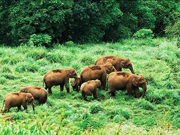 Thekkady Luxury Tourism | Kerala Luxury Tour Packages | Luxury Hotel Booking in Thekkady