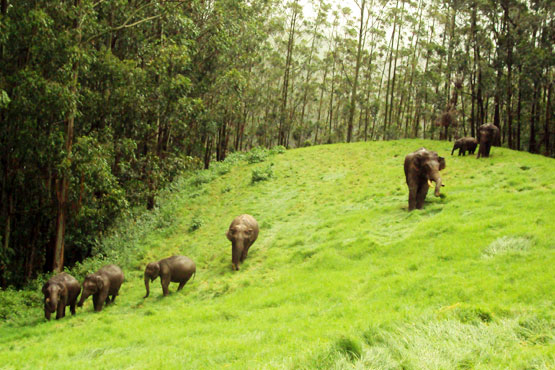Kerala Cultural Tour | Tourist Activities in Thekkedy | Periyar | The Travel Planners